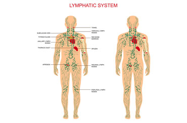 lymphdrainage 003